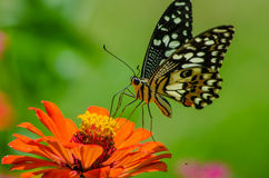 Бабочки и цветки Стоковые Фото