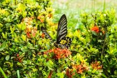 Бабочки и цветки Стоковая Фотография