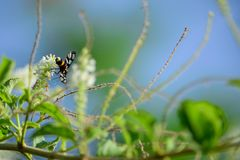Бабочки и цветки Стоковое Фото