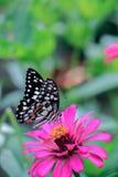 Бабочки и цветки Стоковое Изображение