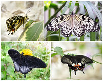 Бабочки - комплект 4 съемок фото Стоковые Фото