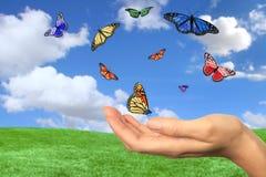 бабочки летая свободно довольно Стоковые Изображения