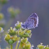 бабочки Мед-бабочки стоковые изображения rf