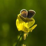 бабочки Мед-бабочки стоковая фотография