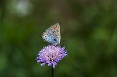 бабочки Мед-бабочки стоковое изображение