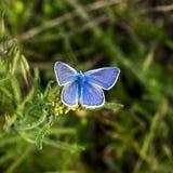 бабочки Мед-бабочки стоковое изображение rf