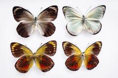 Бабочки на белой предпосылке Стоковое фото RF