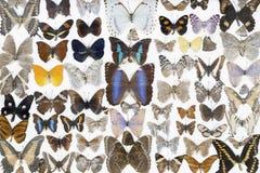 Бабочки на белой предпосылке Стоковые Фото