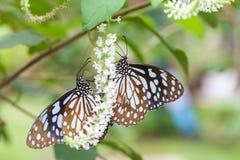 2 бабочки на букете белых цветков Стоковое Фото