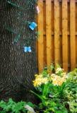 Бабочки на дереве в весне Стоковое Изображение RF