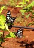 Бабочки на заводе Стоковое фото RF