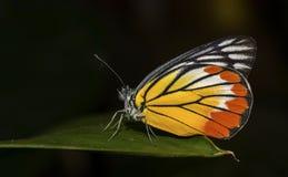 Бабочки на лист в черной предпосылке Стоковое фото RF