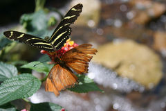 бабочки над потоком Стоковая Фотография