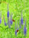 Бабочки на луге Стоковое Фото