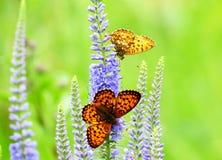 Бабочки на луге Стоковые Фото