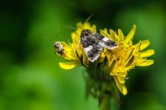 2 бабочки на цветени Стоковые Изображения