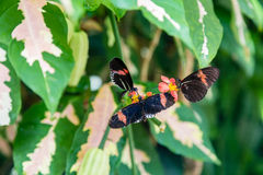 3 бабочки на цветках Стоковая Фотография