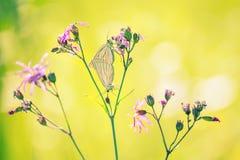 Бабочки на цветках Стоковое Изображение RF
