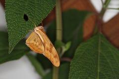 Бабочки на цветке в природе Стоковое Изображение RF