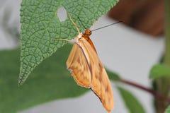 Бабочки на цветке в природе Стоковая Фотография