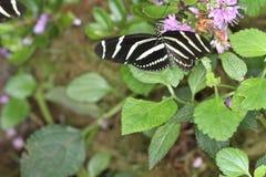 Бабочки на цветке в природе Стоковые Фотографии RF