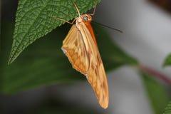 Бабочки на цветке в природе Стоковые Фото