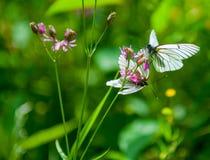 Бабочки на цветке Стоковое фото RF