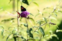 Бабочки на цветке Стоковые Фото
