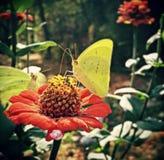 Бабочки на цветке Стоковая Фотография RF