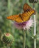 Бабочки на цветке Стоковые Фотографии RF