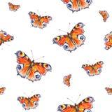 Бабочки павлина на белой предпосылке банкы рисуя цветя замотку акварели валов реки Искусство насекомых Ручная работа Стоковая Фотография RF