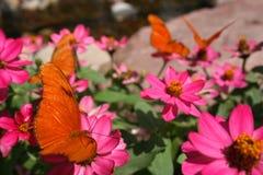 бабочки померанцовые Стоковая Фотография RF