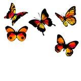 бабочки померанцовые Стоковые Изображения RF