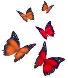 бабочки предпосылки красивейшие изолировали белизну Стоковые Фото