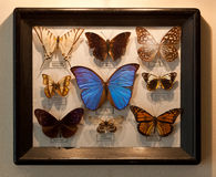 Бабочки рамки Стоковая Фотография RF
