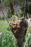 бабочки скоро Стоковое фото RF