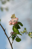Бабочки сопрягают стоковые изображения rf