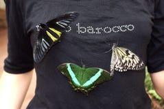 бабочки троповые Стоковое Изображение