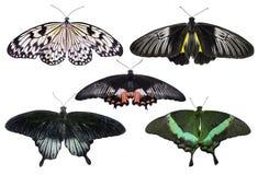 Бабочки установленные на белизну Стоковое Фото