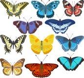 бабочки цветастые иллюстрация вектора