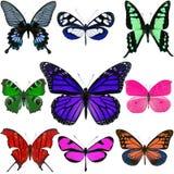 бабочки цветастые Стоковое фото RF
