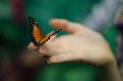 бабочки экзотические Стоковое Изображение RF