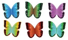 Бабочки Стоковые Фото