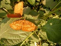 Бабочки Стоковое Фото
