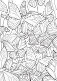 Бабочки бесплатная иллюстрация