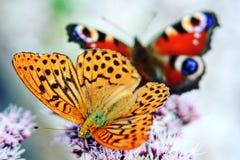 Бабочки Стоковое фото RF