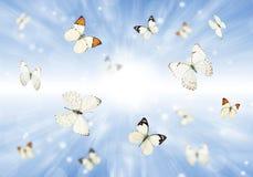Бабочки 3D Стоковая Фотография