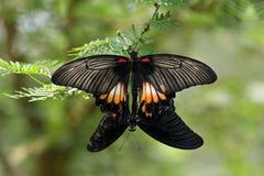 Бабочки, Sentosa, Сингапур Стоковые Фото