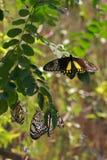 Бабочки, Sentosa, Сингапур Стоковое фото RF