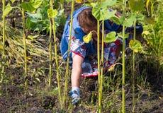 Бабушка срывает траву в саде стоковые изображения